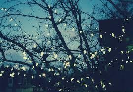 photography pretty illustration lights light tree believe sky