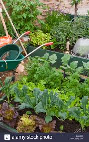 When To Plant Spring Vegetable Garden by Vegetable Garden Wheelbarrow Plants Raised Beds Tools