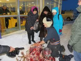reindeer slaughter kautokeino norway feb 2017 jpg aleut