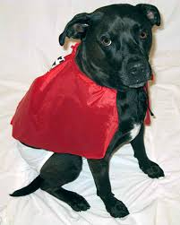 Martha Stewart Dog Halloween Costumes Halloween Pet Costumes U0027 U0027martha U0027 U0027 Audience Martha Stewart