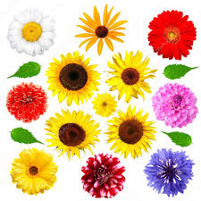 set of summer flowers isolated u2014 stock photo rozaliya 1614454
