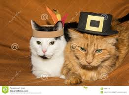 thanksgiving cats stock image image of food corn 62981145