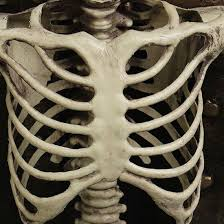 halloween realistic skeleton scary skull man bone creepy prop