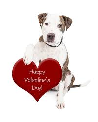 10 ways to celebrate valentines day with your dog