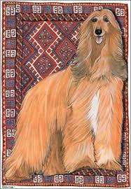 afghan hound agility 60photos afghan hound pinterest afghan hound afghans and