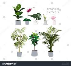 vector pot plants illustration philodendron palm stock vector