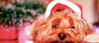christmas trees and dogs don u0027t mix hartz