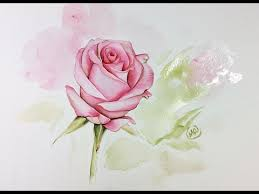 how to paint a pink u0026 yellow rose watercolour tutorial youtube