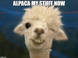 alpaca imgflip