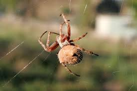 spider simple english wikipedia the free encyclopedia