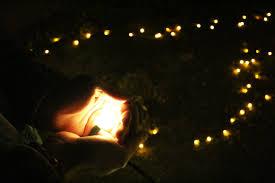 Phoenix Zoo Lights by Year Eight U2013 The Quiet Creative