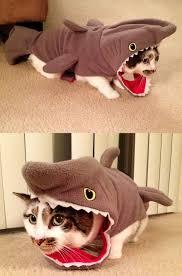 in costumes best 25 cat costumes ideas on cat costumes cat