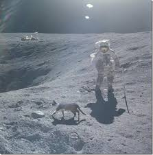 cat on the moon pictures http bestyoulike com