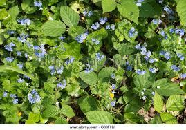 wild flowers garden uk stock photos u0026 wild flowers garden uk stock