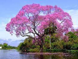 chidinma inspirations the world most beautiful tree