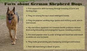belgian shepherd weight chart amazing german shepherd facts