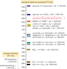 Standard Reduction Potentials Table What Is The Redox Potential Of A Cell