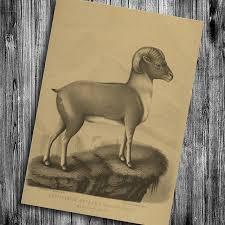 Goat Home Decor Modern Vintage Animal Goat Prints Posters Krafts Paper