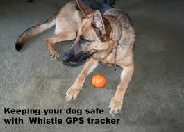 keep your dog safe with whistle gps tracker my life is a journey