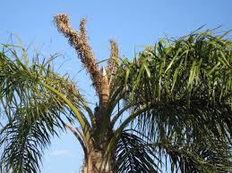 tree doctor cape coral florida root fertilization vitamin