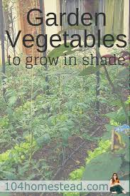 think you can u0027t grow vegetables in your shady yard gardens