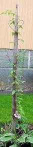 Support For Climbing Plants - garden pot obelisk trellis metal u2026 pinteres u2026