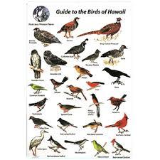 Hawaii Birds images Trident id card hawaiian birds dip 39 n dive jpg