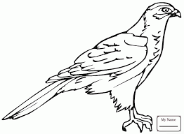 coloring pages for kids birds funny hawk coloring7 com