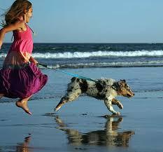 australian shepherd lovers 22 best sammi images on pinterest dog wheelchair wheelchairs