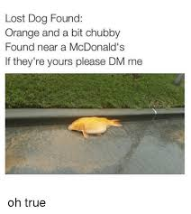 Lost Dog Meme - lost dog found orange and a bit chubby found near a mcdonald s if