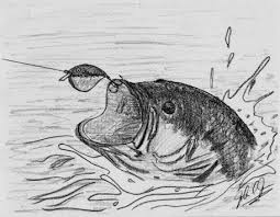 the bass fish by jones the of drawing