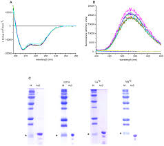relationships between ige igg4 epitopes structure and function in