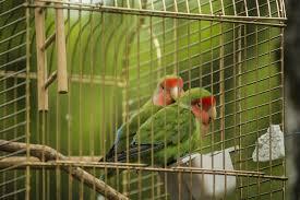 uccelli in gabbia perch礬 inserire osso di seppia e grit nella dieta degli uccellini