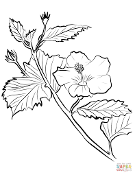 hibiscus coloring pages free coloring pages