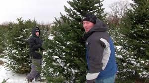 cutting our own christmas tree rum river tree farm oak grove