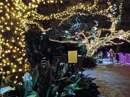 Christmas Lights At Houston Zoo by Of Golden Roses Houston Zoo Lights