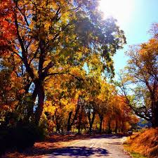 8 beauty northern california images