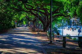 Botanic Gardens Brisbane City Brisbane City Botanical Gardens Stuff To Do In Brisbane
