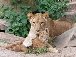 baby animals a science lesson kids discover