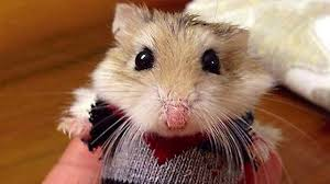 funny hamster compilation new youtube