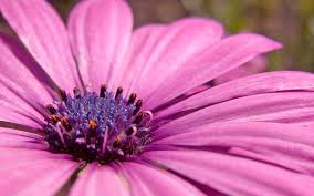 pink flower pink flower picture wallpaper gipsypixel