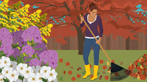 plant these late summer flowers fix com