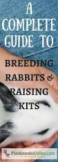 Rabbit Hutch Plans For Meat Rabbits Best 25 Raising Rabbits Ideas On Pinterest Rabbit Food Meat