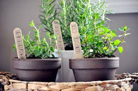 the countertop herb garden fresh healthy herbs at your fingertips