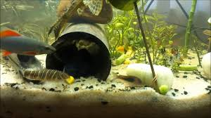 types of tropical aquarium fish admissions guide