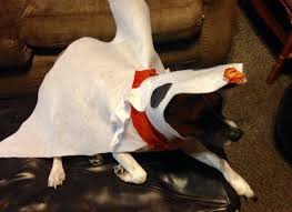 the 25 best dog halloween costumes ideas on pinterest diy dog