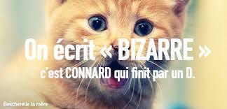 Comme Meme - des chatons pour vos amis â bescherelle ta mã re