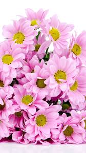 63 best darling u203bdaisy images on pinterest flowers pink flowers
