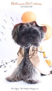 Dog Halloween Party Ideas 199 Best Critters In Costume Images On Pinterest Animals Pet