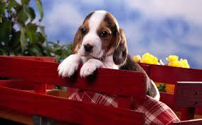puppy wallpaper 6863610